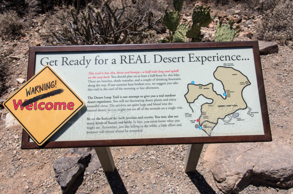 Real Desert Experience