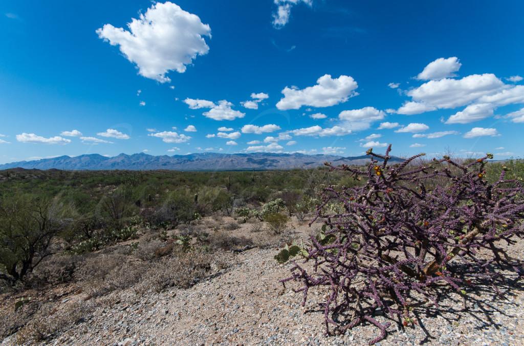 Saguaro NP 2